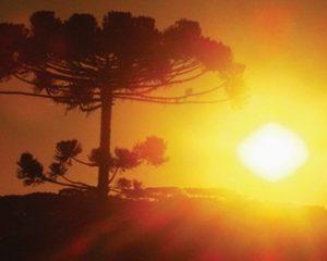 Planeta Terra bate recorde de altas temperaturas